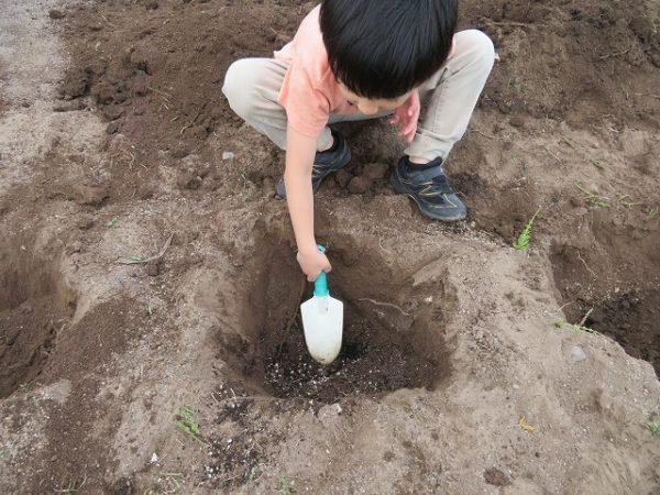 子どもと一緒に家庭菜園するメリットとは