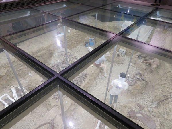 群馬県立自然史博物館 恐竜の化石の発掘現場