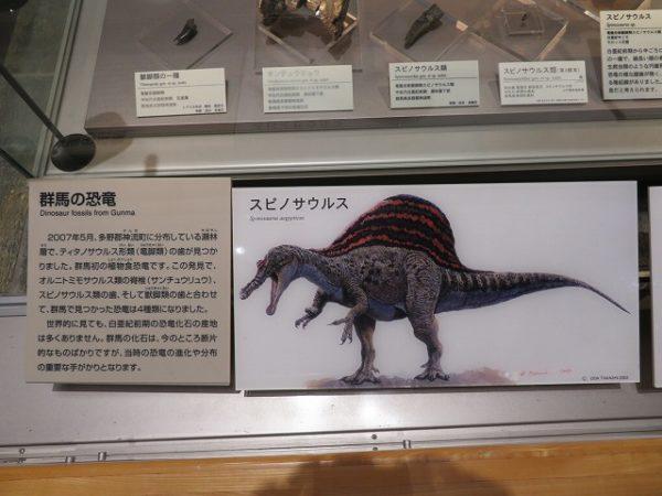群馬県立自然史博物館 スピノサウルスの歯
