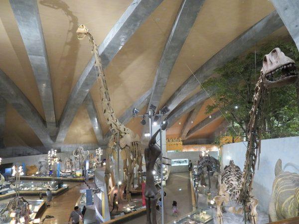 群馬県立自然史博物館 恐竜の骨格標本