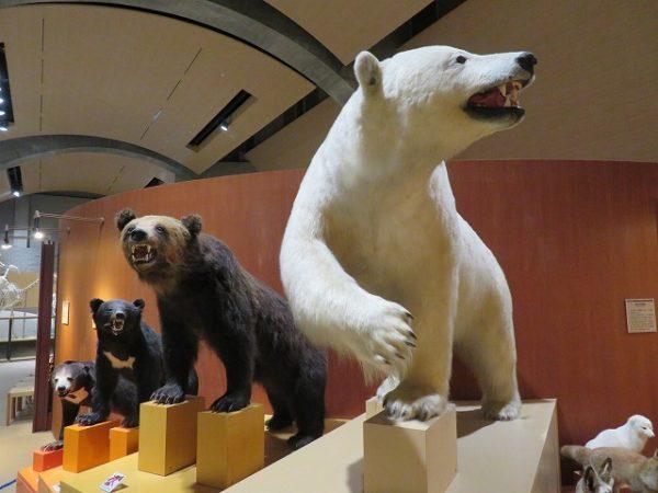群馬県立自然史博物館 動物の標本