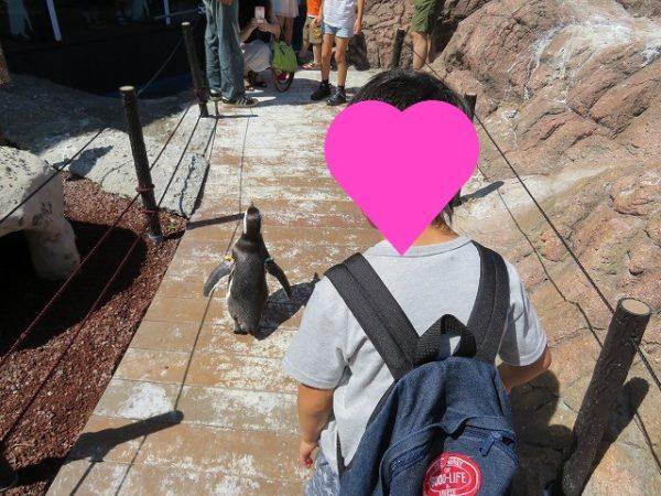 うみがたり マゼランペンギンをまじかで観察できる