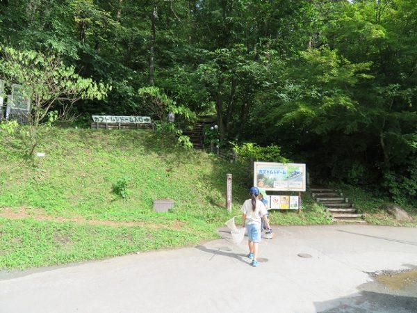 カブトムシドームへの小路