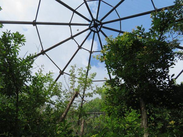 カブトムシドームの屋根